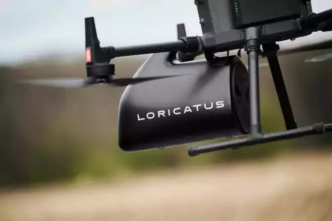 loricatus