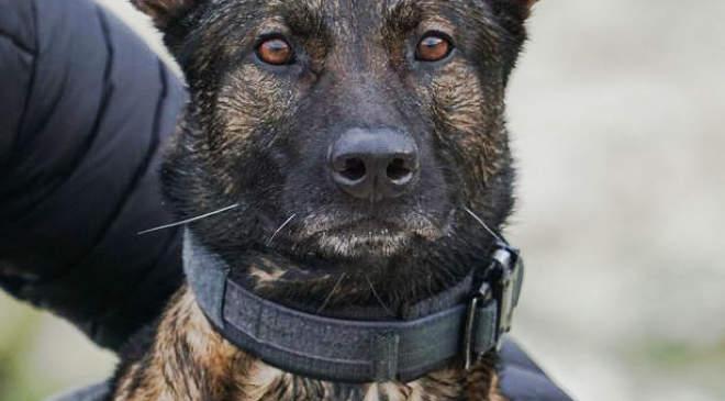 A hős Kuno kutya